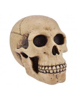 Crâne grand modèle