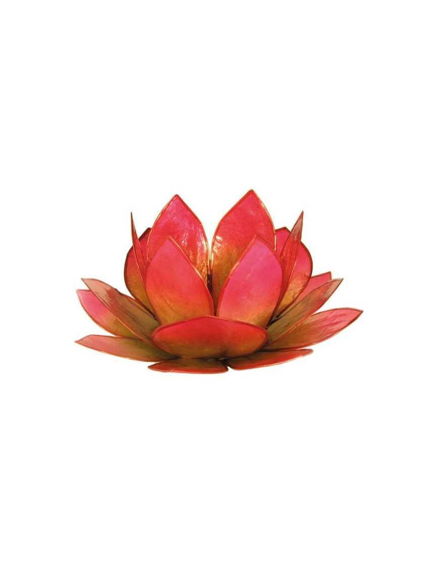 Lotus Lever du Soleil